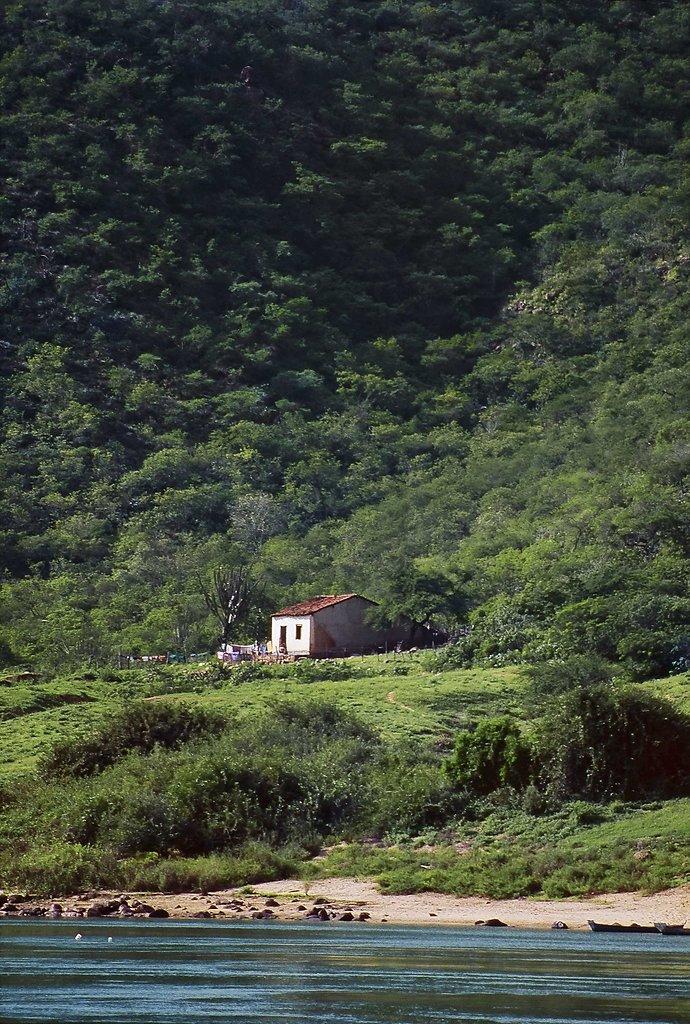 Sertão Verde