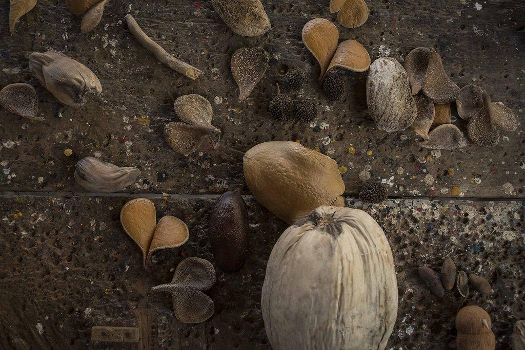 Entrelaçados de Casca, raízes e frutos. CE.
